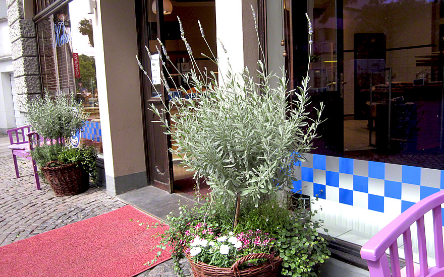strauch lavendel pflanze lavandula x allardii. Black Bedroom Furniture Sets. Home Design Ideas