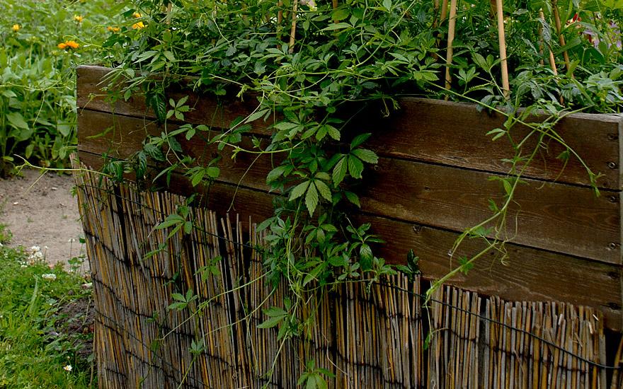 sichtschutz rankende pflanzen kreatif von zu hause. Black Bedroom Furniture Sets. Home Design Ideas