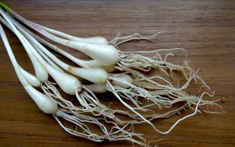 Rakkyo (Japanische Lauchzwiebel) (Pflanze)