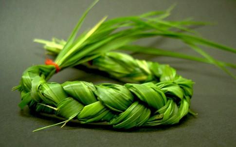 Mariengras (Süßgras) (Pflanze)