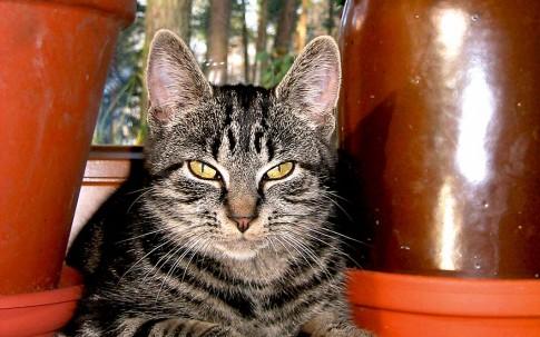 Greenpäck Katze