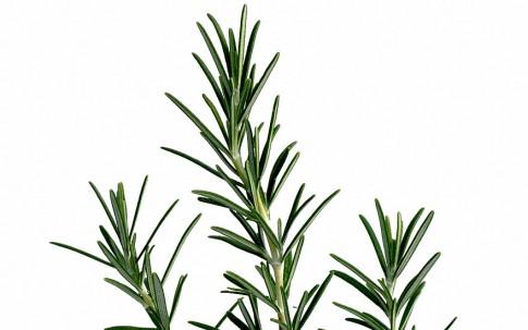 Rosmarin 'Hill Hardy' (Pflanze)