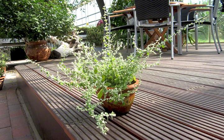 polpala pflanze ayurvedische heilkr uter heilkr uter. Black Bedroom Furniture Sets. Home Design Ideas