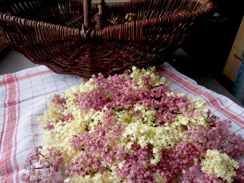 Holunderblütensirup von Patricia Rühlemann