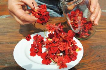 Kapuzinerkresse-Blütenessig