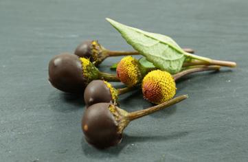 Kraeuter und Schokolade 7