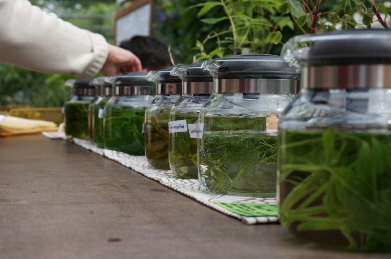 Zubereitung von Tee aus frischen Kräutern