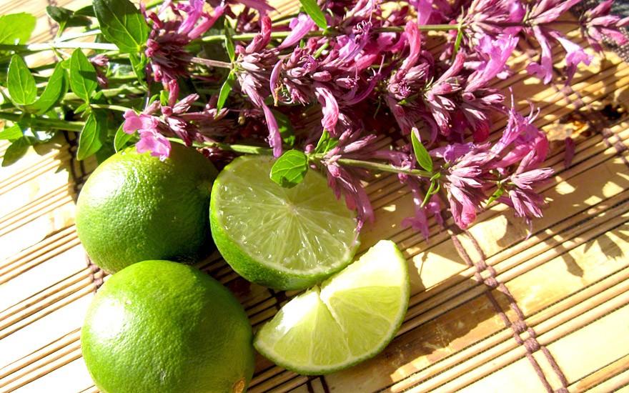 Limetten-Agastache (Pflanze)