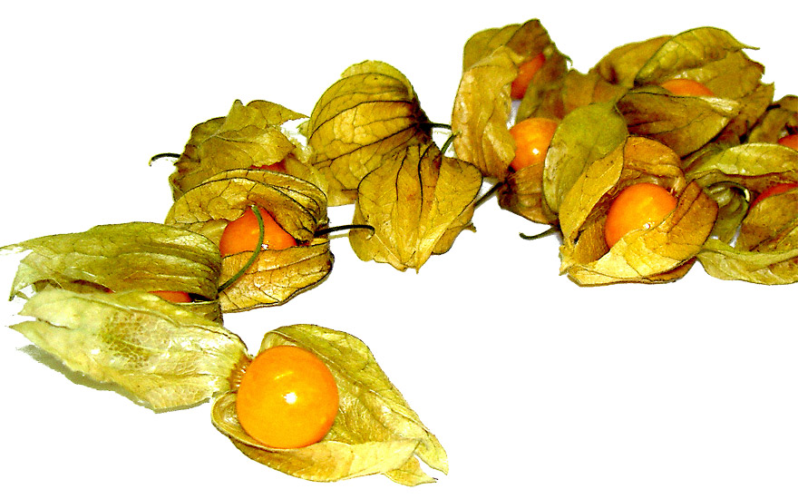 Andenbeere, Physalis (Pflanze)