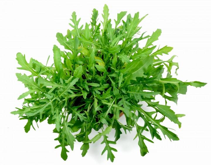 Salat_ruc01_DSC08184