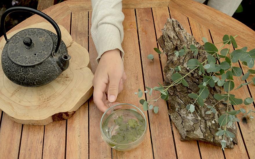 Tasmanischer Eukalyptus (Pflanze)