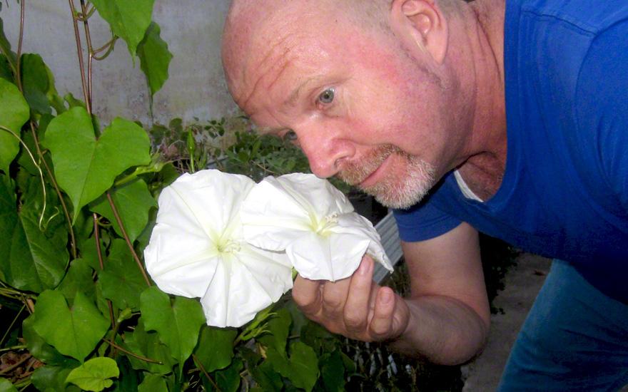 Mondwinde (Pflanze)