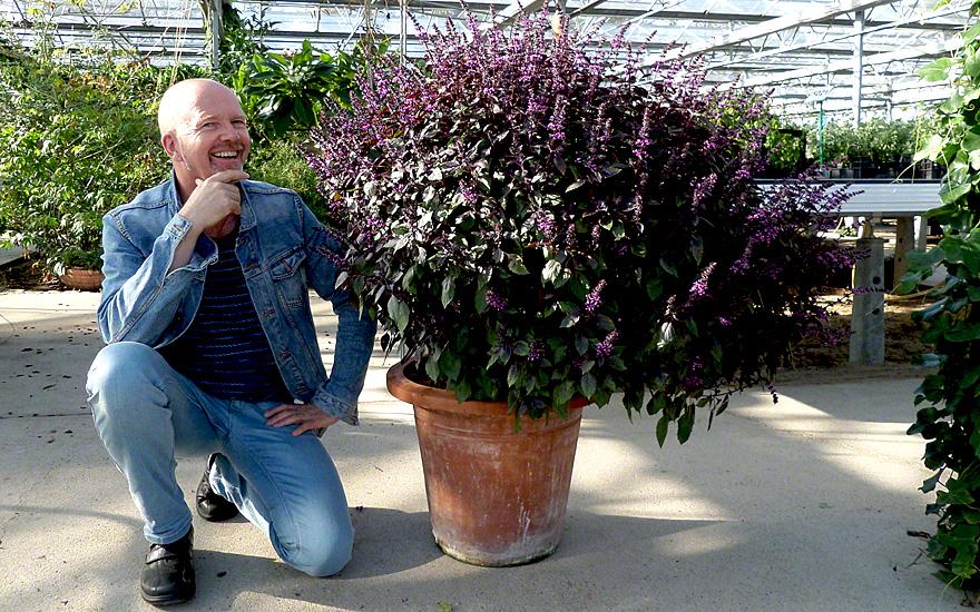 www.kraeuter-und-duftpflanzen.de