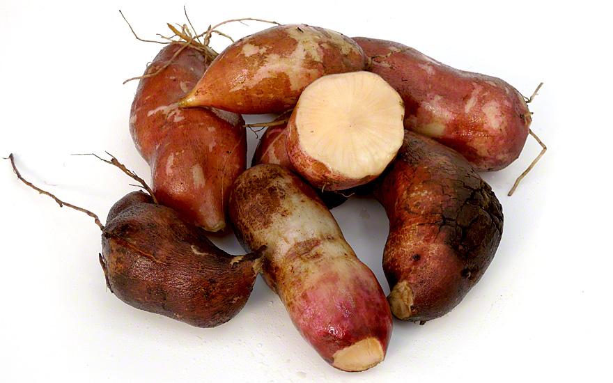 Yacon Morado (Pflanze)