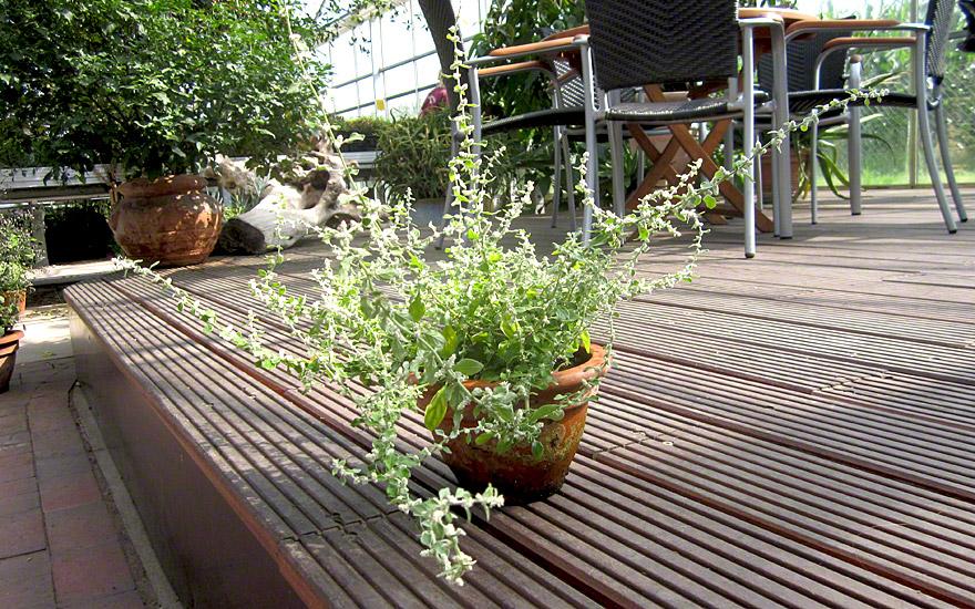 polpala pflanze aerva lanata ayurvedische. Black Bedroom Furniture Sets. Home Design Ideas