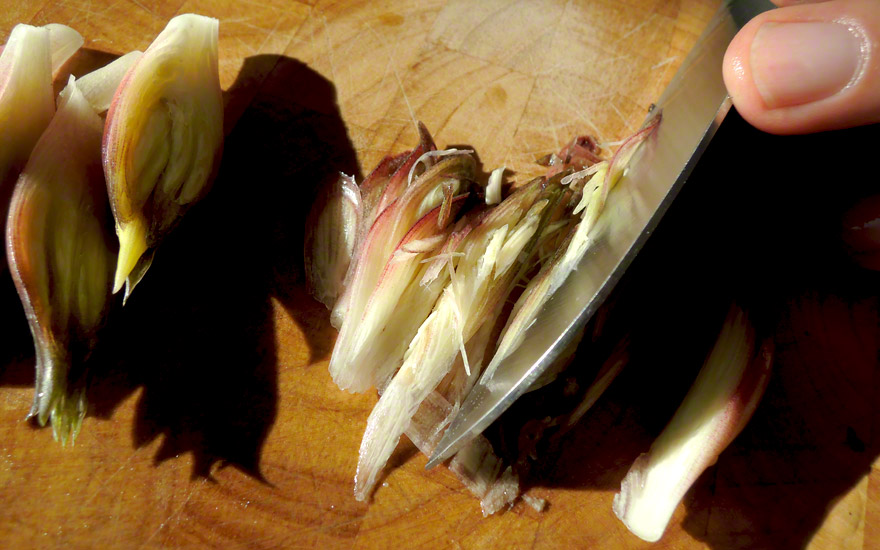 Japanischer Ingwer (Myoga) (Pflanze)