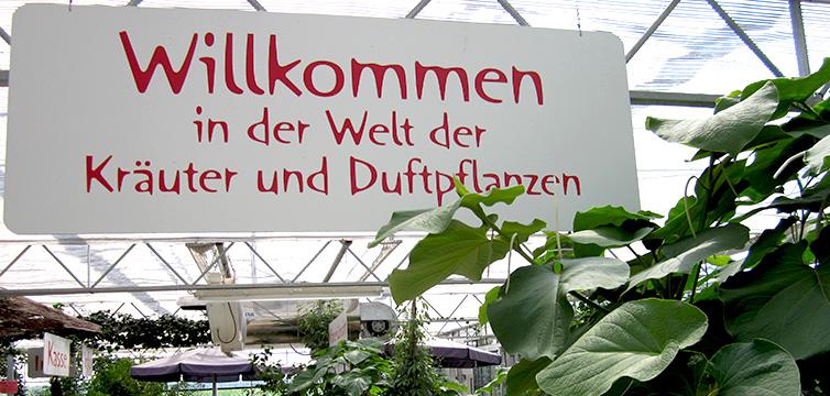 Rühlemann's Kräuter Und Duftpflanzen Duftpflanzen Im Garten Blumen Krauter